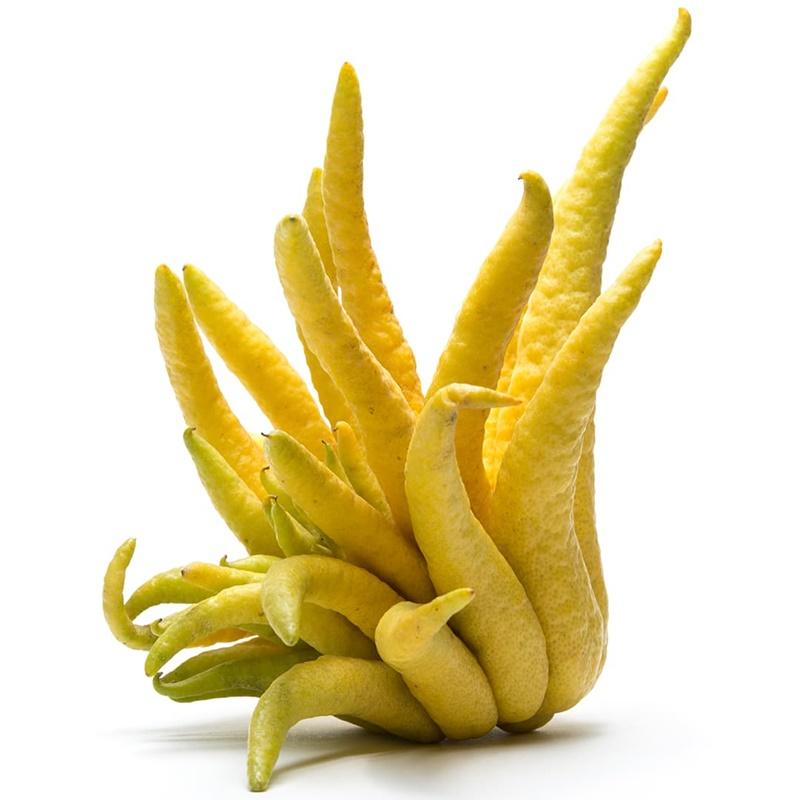 3 Yaş Budanın Eli Limon Fidanı