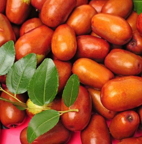 10 Yaş Ufak Meyveli Hünnap Fidanı